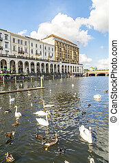 flock of swans at alster in Hamburg with facade of historic...