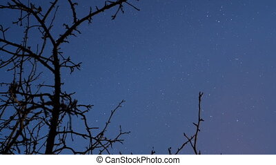 Night Sky with Stars. Time Lapse. Trees Branches Silhouette
