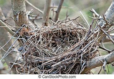 bird nest - empty bird nest with tree branche