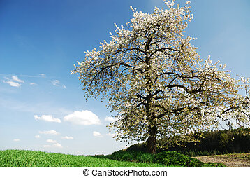 Flowering tree - Spring scenic whith a flowering tree in...