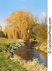 Weeping willow - Wheeping willow at a river in Bavaria