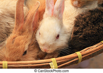 Rabbit small lot sold at the market.