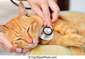 Veterinarian examining a kitten in animal hospital