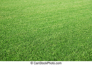 Lawn - Background of perfect short cut green golf grass