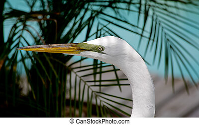 tropical bird in a park in Florida - tropical bird in a park...