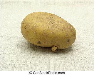 Singel unpeeled potato on a beige background