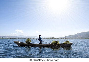 harvesting - an old women carrying dry wheat by wooden boat...