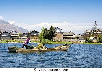 harvesting - farmer carrying dry wheat by wooden boat after...