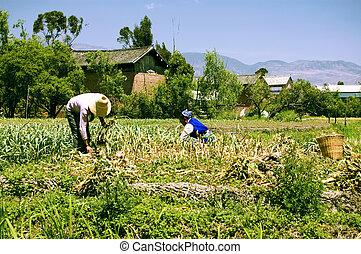 granja, dos, trabajando, mujeres