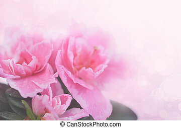 Pink background with flowers of an azalea for design