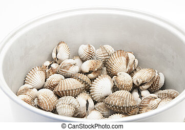 roughly fresh cockles on a white background