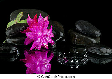 flower in water with stone
