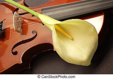 violino,  lille