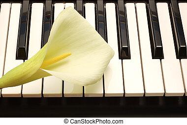 piano,  lille