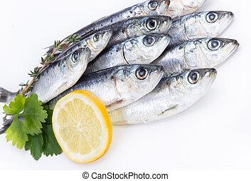 cru, fresco, sardinhas