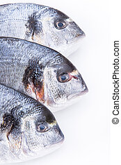 Fresh Dorado fishes on a white background