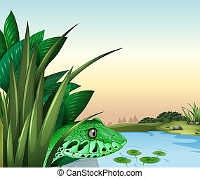 A reptile near the pond