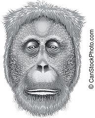 Un, cabeza, orangután