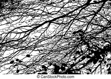 Branches - Black and White Cut Out of Branches