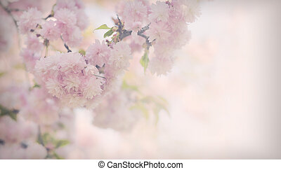 Vintage flowers. Antique style photo of tree flowers and...