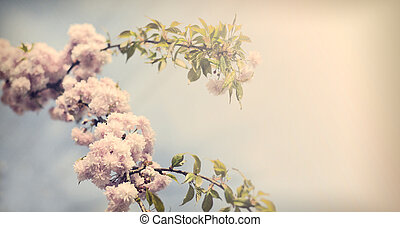 Vintage sacura - Vintage flowers. Antique style photo of...