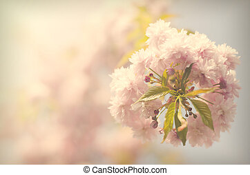 Vintage sacura - Vintage flowers Antique style photo of tree...