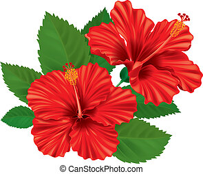 Hibiscus flower. Contains transparent objects. EPS10