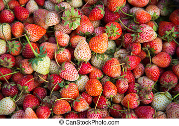 Fresh Strawberry - full frame