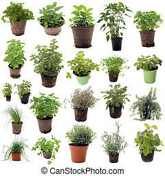 aromatic herbs in front of white background