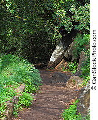 Forest Path  - nice path through green forest