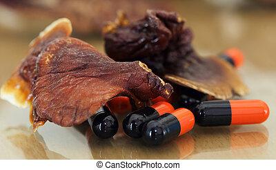 Ganoderma mushroom with capsule - Close up of ganoderma...
