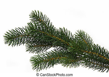 Fir tree branch - Plastic fir tree branch isolated on white...