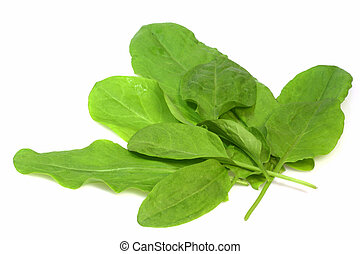 Garden sorrel - Fresh garden sorrel on bright background