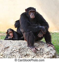 Two monkeys sitting on a rock at the zoo.