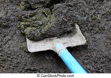 Cow manure  - Closeup of cow manure with shovel