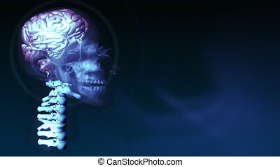 Human Brain 4 - 3d Brain in High Definition format