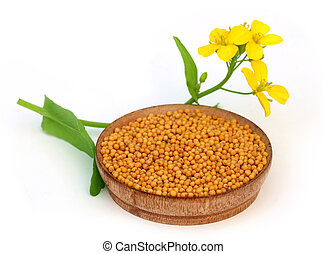 Mustard flowers with seeds over white background