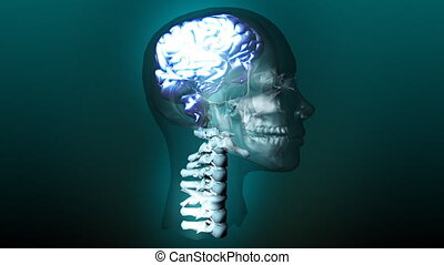 Human Brain - Animated Human Skull showing Brain