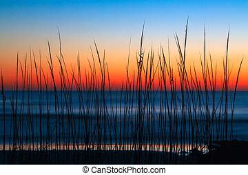 Dune Grass Dawn - Dune grass is silhouetted by a colorful...