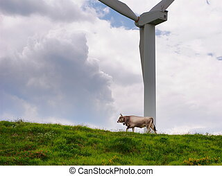 Cow and windmill - Cow walking under a windmill