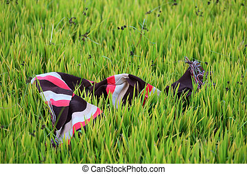 Closeup of  colorful scurf of farmer on paddy field