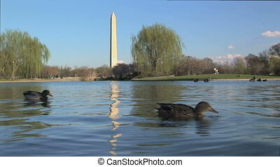 Ducks swimming in front of Washington monument - Water...