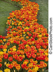 Flower bed at park