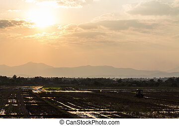Tractor Prepares Rice Paddy, Agriculture In Thai