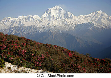 Annapurna mountain range and village on hill