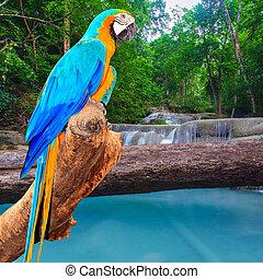 papagallo, pájaro