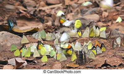 Colorful tropical butterflies