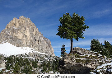 Tree on the rock in Sasso Piatto Dolomites Italy