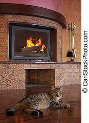 fireplace - Thick striped cat about a fireplace