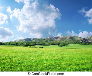 Green meadow in mountain Composition of nature